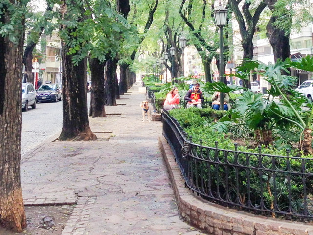 A tree-line street in Palermo