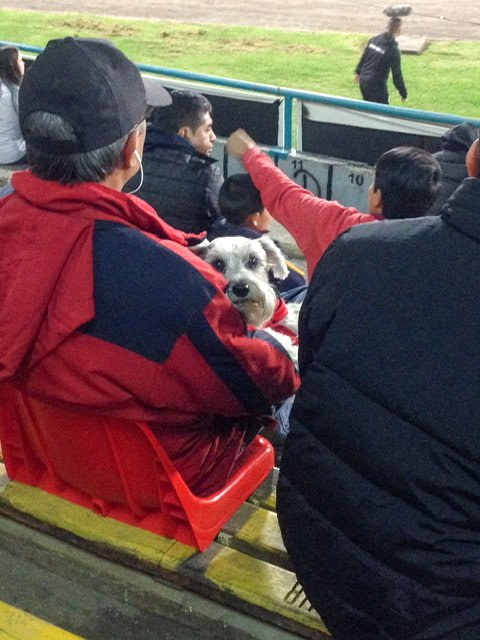 A dog sitting on a man's lap at a soccer game