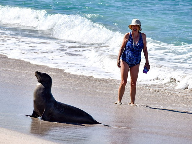 A woman and a sea lion on a beach