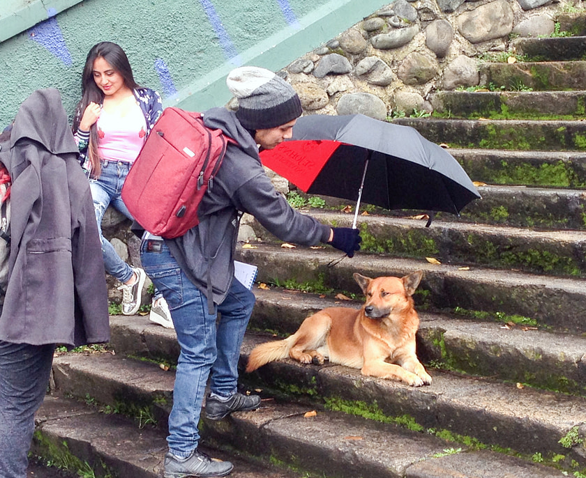 Man holding an umbrella over a dog lying on a stairway
