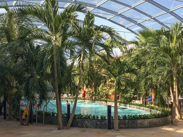 Indoor pool at Therme Bucuresti surrounded by palm trees