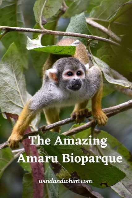 Pin for The Amazing Amaru Bioparque