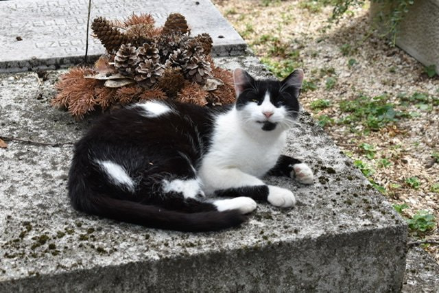 A black and white cat lying on a grave