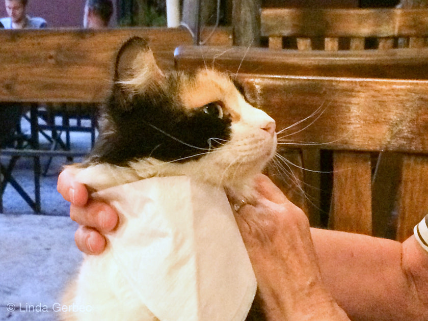 Calico cat with a paper bib