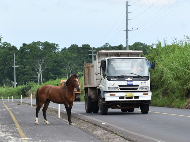 A horse walking near the road