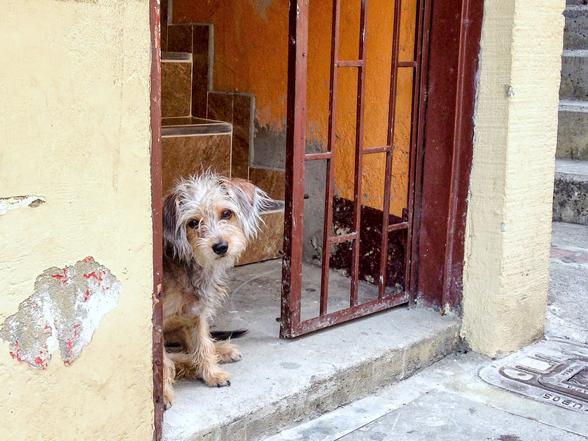 Small dog looking out of a doorway