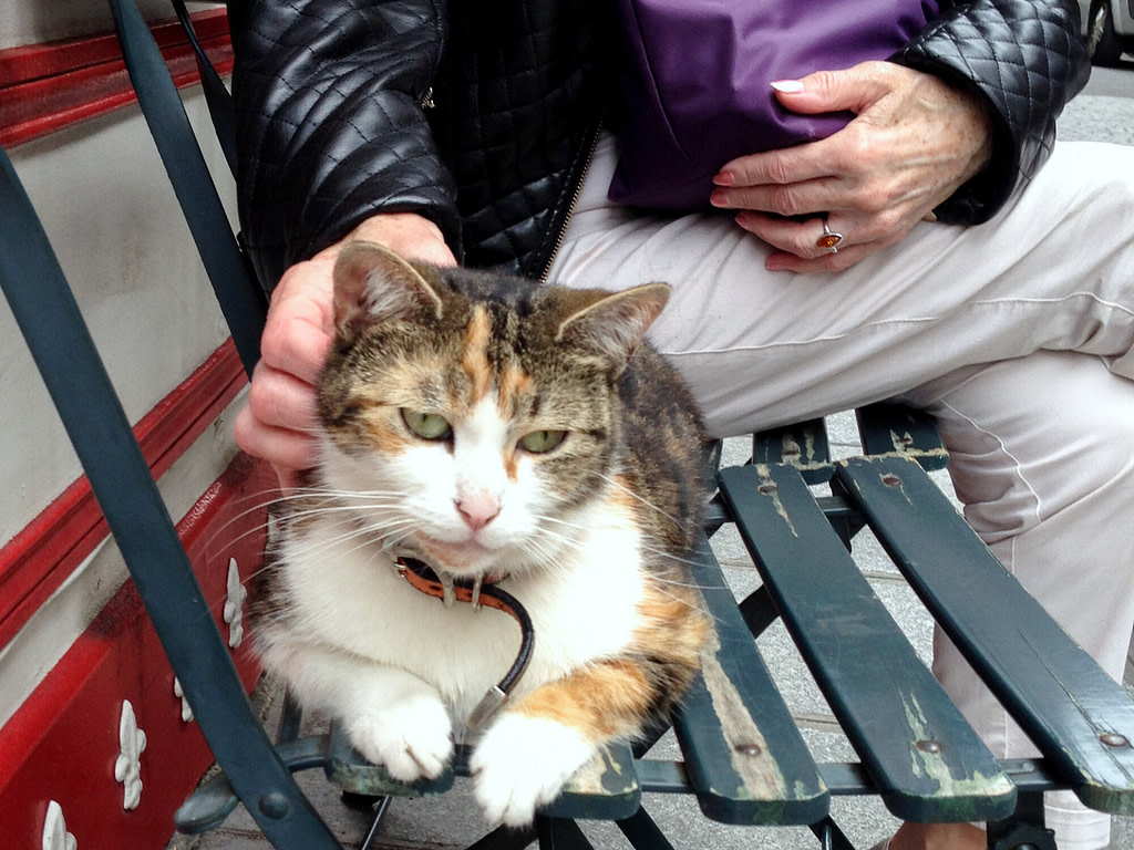 Calico cat being petted