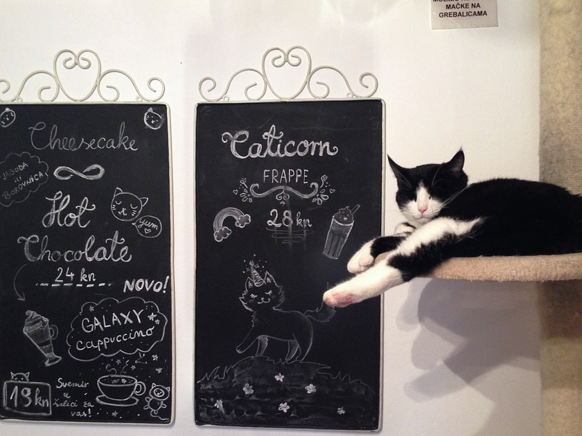 Black and white cat on perch in a cat cafe