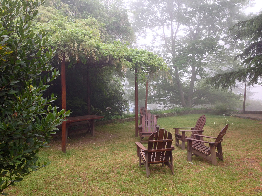 A foggy backyard