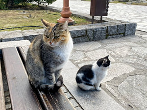 Two cats, one sitting on a bench, the other on the ground