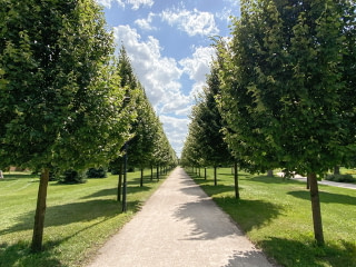 A straight walkway lined by trees