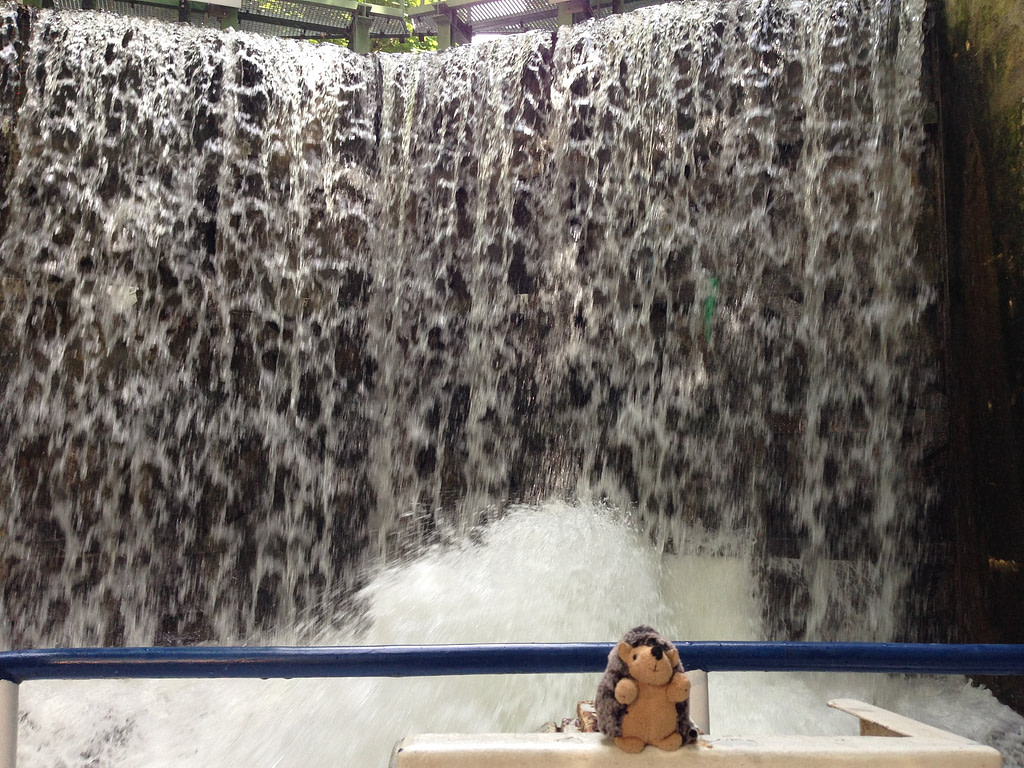 Toy hedgehog in front of water cascading over a lock
