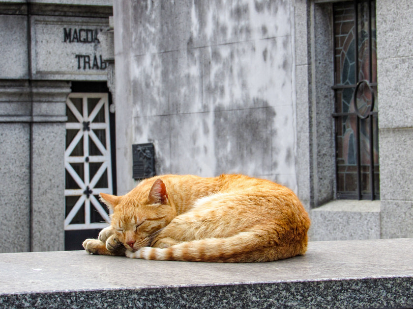 Orange cat on a tomb