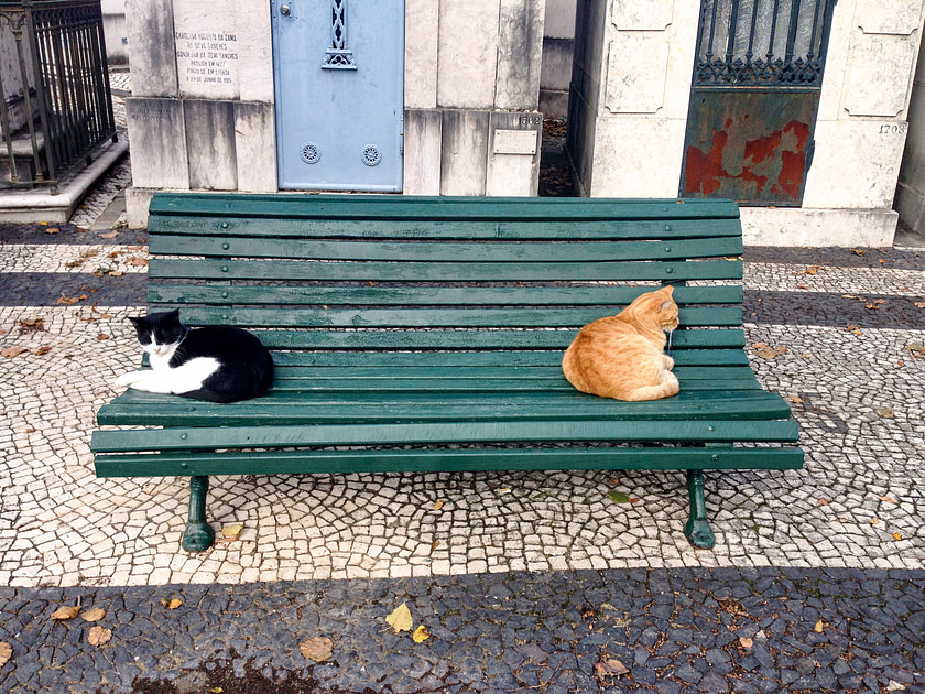 Two cats ignoring each other on a bench in a cemetery