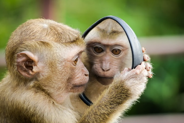 A monkey looking into a mirror