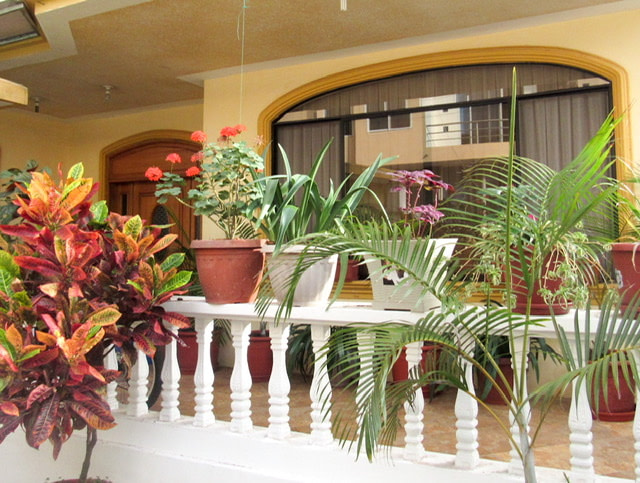 A front porch with plants