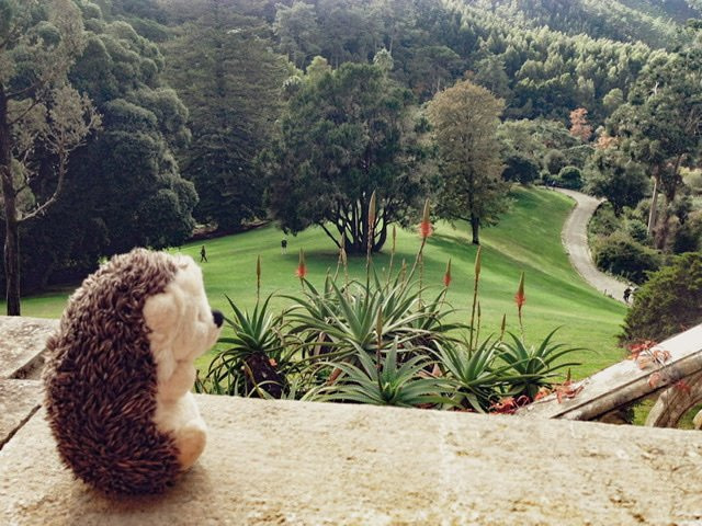 Hedgie overlooking the palace lawn