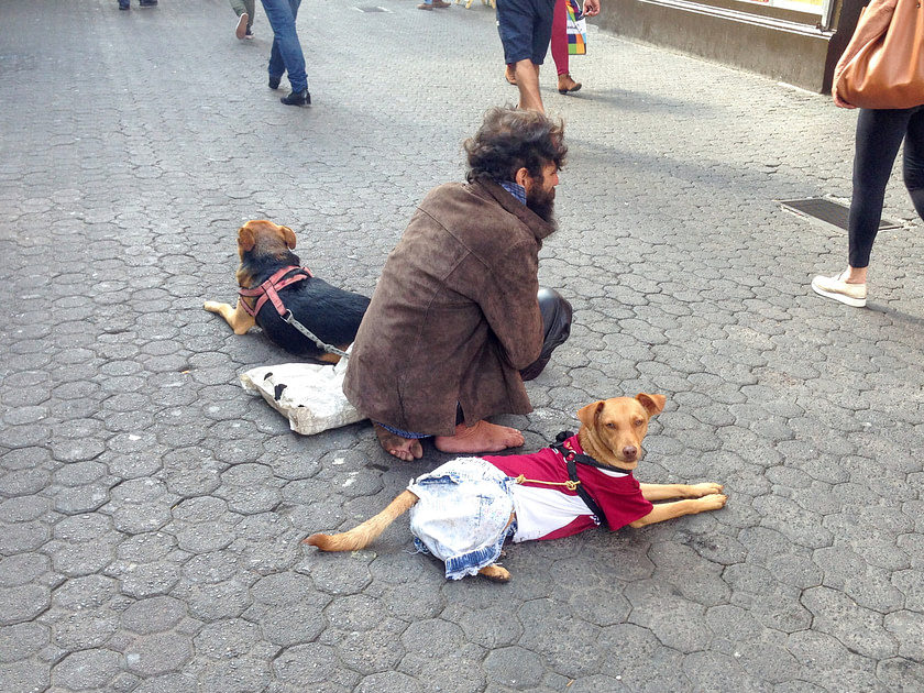 Man with two dogs on city street