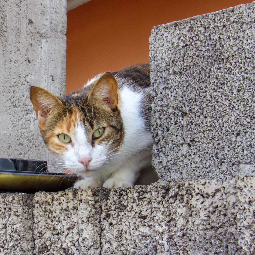 Cat perched on cement wall