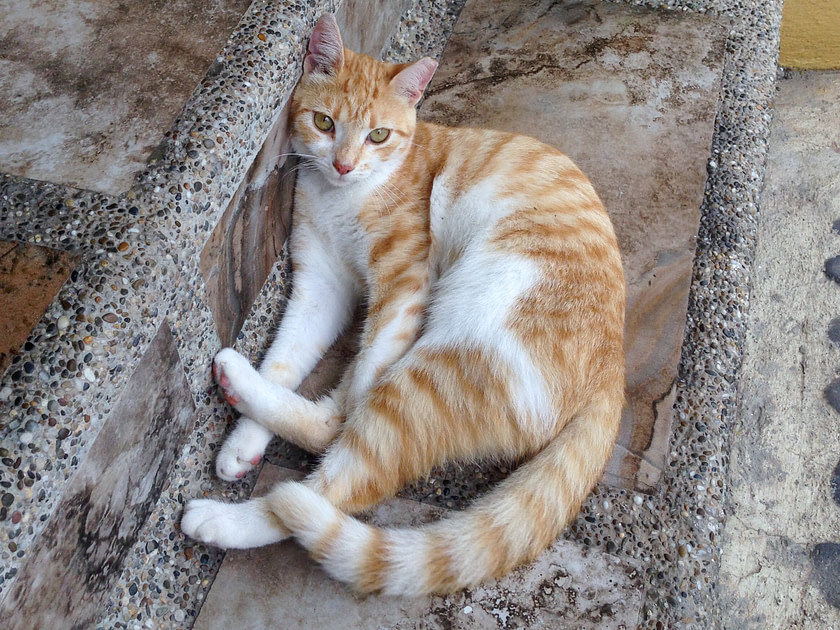 Orange and white cat lounging on stairs