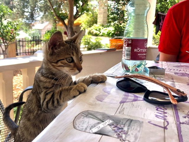 A cat sitting at a table