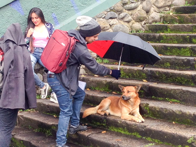 A man holding an umbrella over a dog lying on a stairway