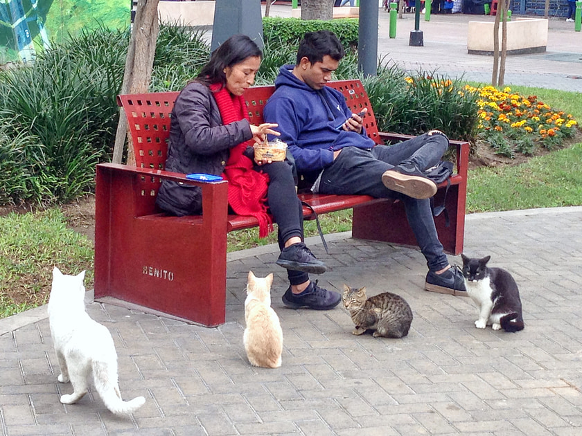 Four cats watching two people eat