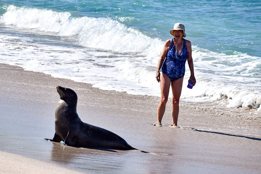 Woman and sea lion on beach