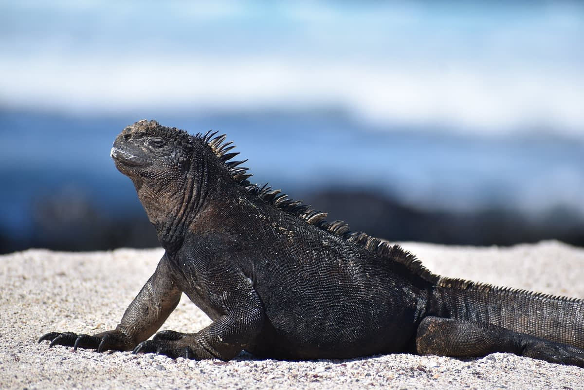 Is a Land-Based Galapagos Trip Right For You?
